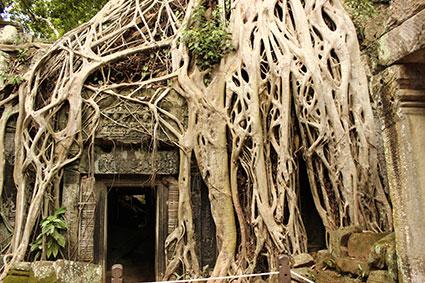 Las inmensas raíces del arbol casi tapan esta puerta de entrada a esta galería, en el templo Ta Phromo (Camboya).