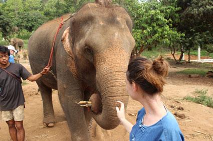 Un elefante se lleva a la boca un par de trozos de caña de azúcar en el campamento Baan Chang, Chiang Mai.