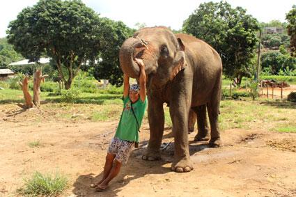 El mahut de Naomi, cuelga de la trompa de este espléndido ejemplar de elefante asiático, en Baan Chang, Chiang Mai.