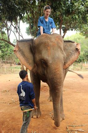Postura correcta para ir a lomos de un efefante. Manos en la cabeza y rodillas detrás de las enormes orejas del paquidermo, Chiang Mai.