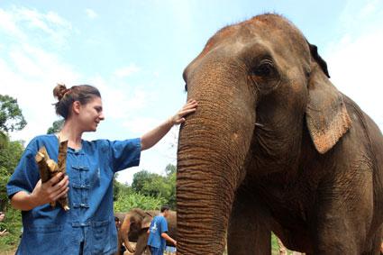 Esther se acerca a un elefante con varios tallos de caña de bambú, en Baan Chang (Chiang Mai).