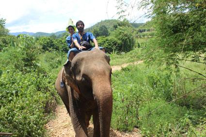 Paseo a lomos de un elefante en medio de la selva, en el Baan Cahng, Ciang Mai.