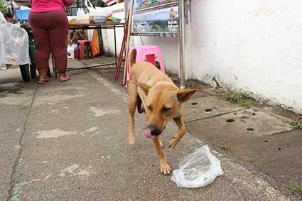 La madre de Pai después de comer unas brochetas que le habíamos comprado, en la calle principal de la villa, Tailandia.