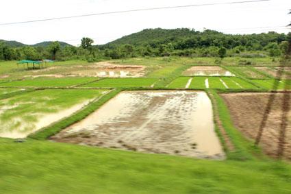 Campos de arroz vistos desde la ventanilla del vagón del tren que nos llevó desde Bangkok y Chiang Mai.