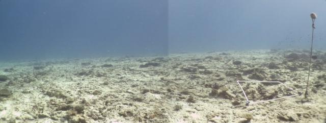 ARREFICE DE CORAL DEGRADADO. El 97% de los corales murieron tras el paso de EL Niño y el tsunami de 2008 en las Seychelles. Copyright: Claude Reveret