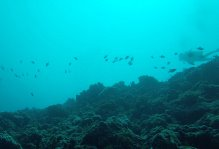 buceo17