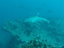 buceo9