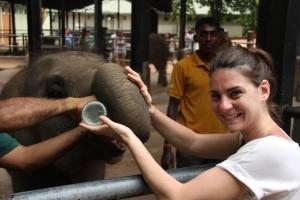 Alimentación con un biberón de leche de una de las crías del orfanato en Pinnewala, Sri Lanka.