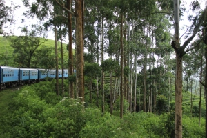Áborles de montaña, en las tierras altas, al paso del tren que va de Kandy a Ella, Sri Lanka