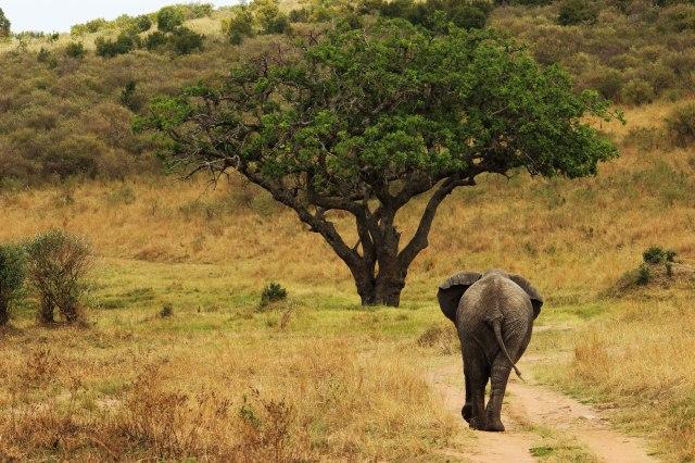 IMG_5844-elefante-y-arbol-Web