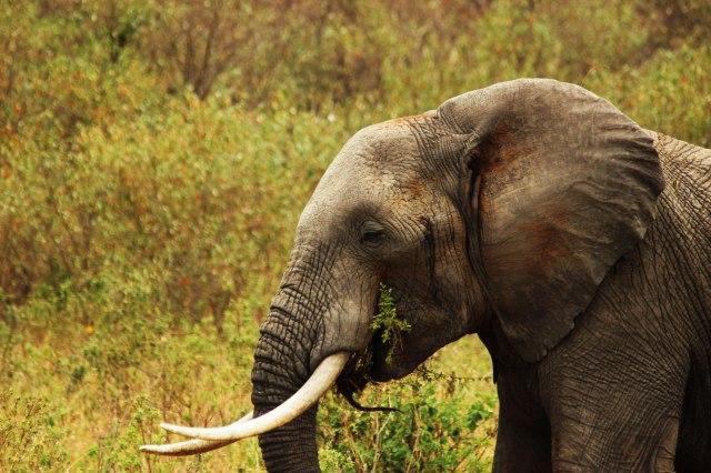 IMG_5849-elefante-comiendo-web