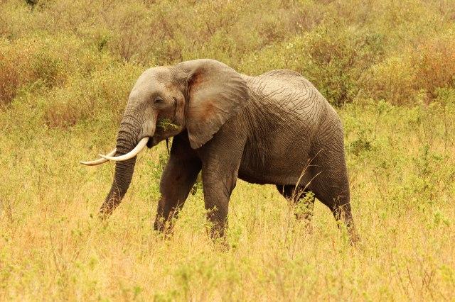 IMG_5854elefante-comiendo-PG-Web