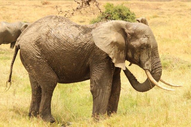 IMG_5876-elefante-tira-barro-2-Web