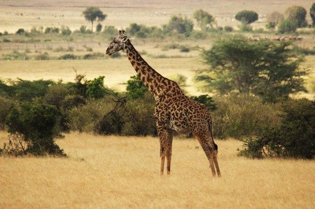 IMG_5979-jirafa-PGweb