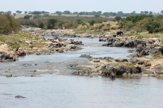 IMG_6490-Rio-Mara-Elefantes-y-agua-web